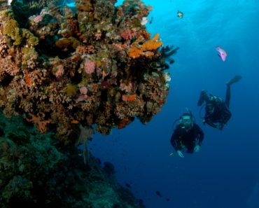 Scuba Diving - 10 Reasons Why I Love It !