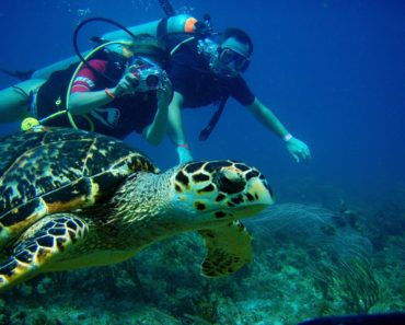Discover Scuba Diving, a great introduction to the diving world
