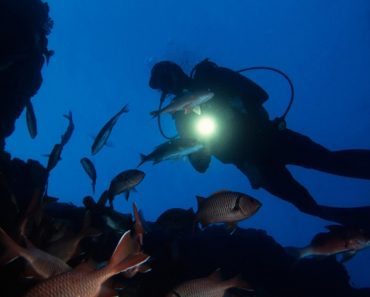 Night Diving, try it at Davy Jones Locker!